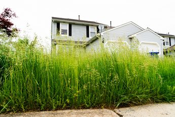 can the city fine me for overgrown landscaping in Sacramento